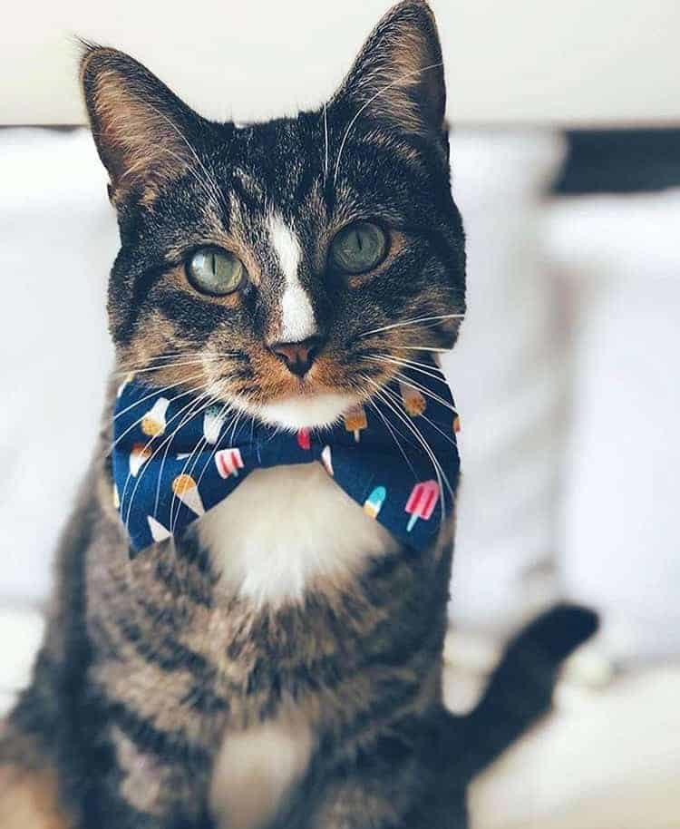 Bowties for your Pets Canada, Shop Local Canada, Made in Ontario