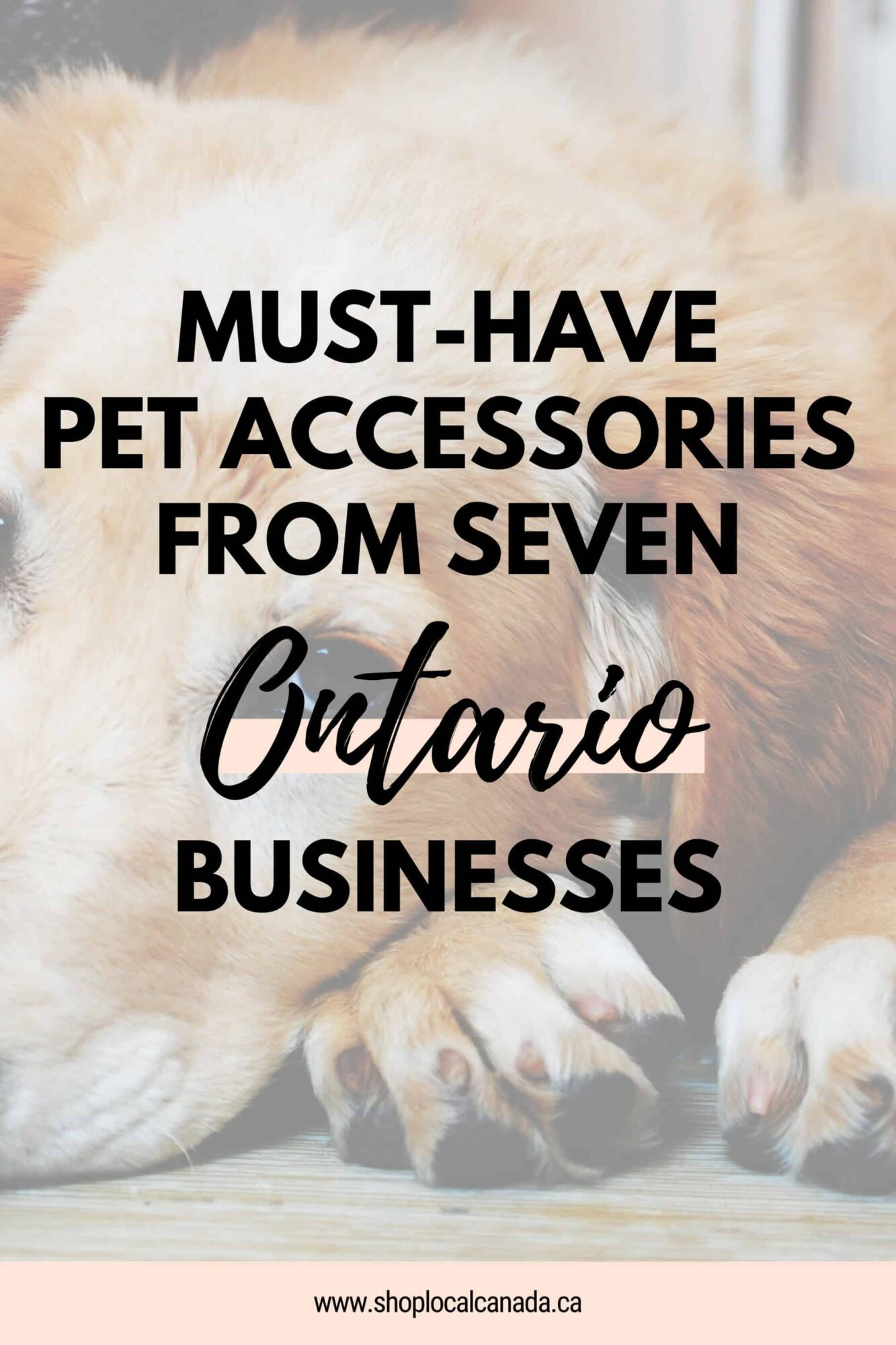 Must-Have Pet Accessories from Seven Ontario Businesses