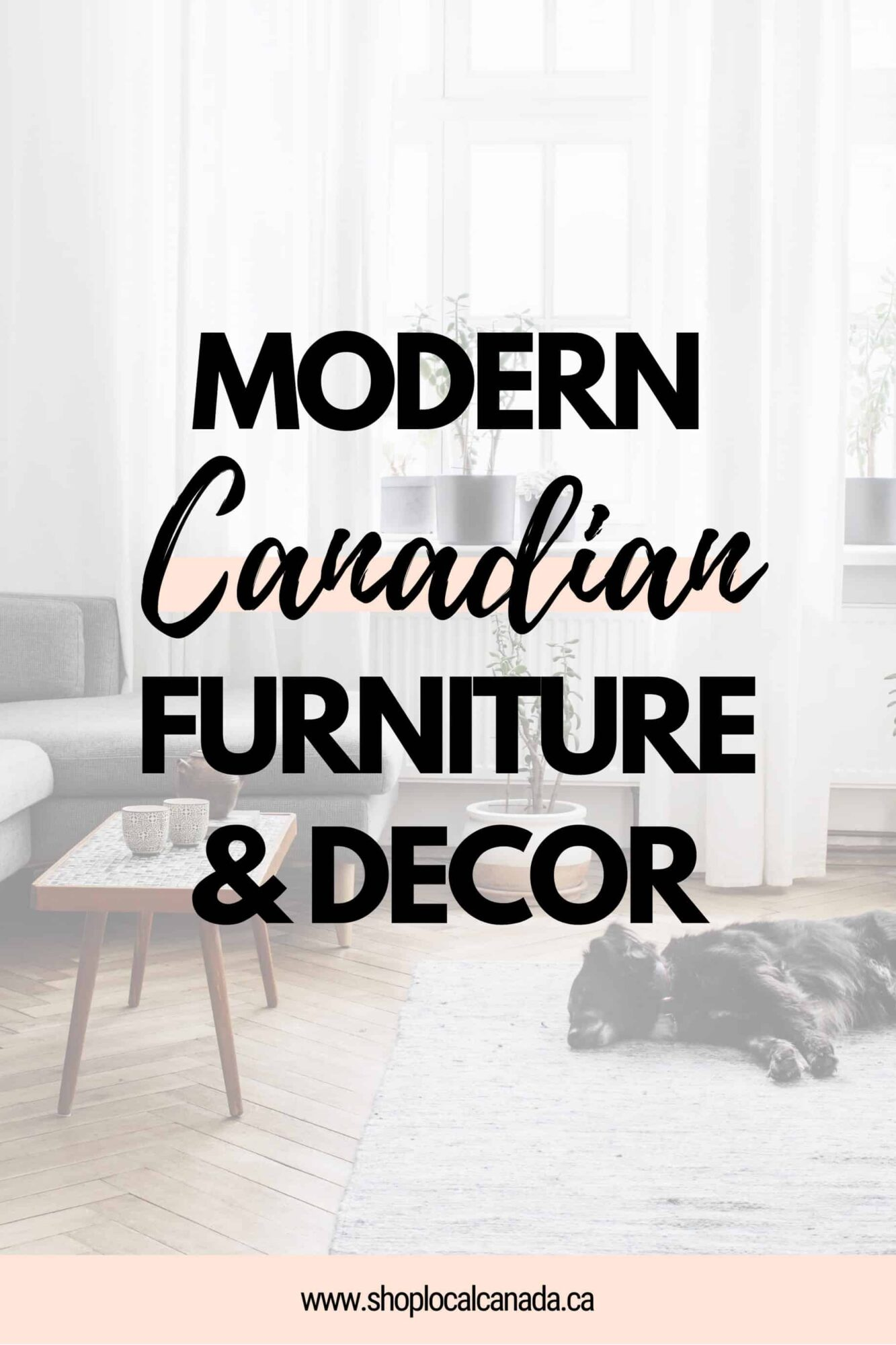 Modern Furniture & Decor