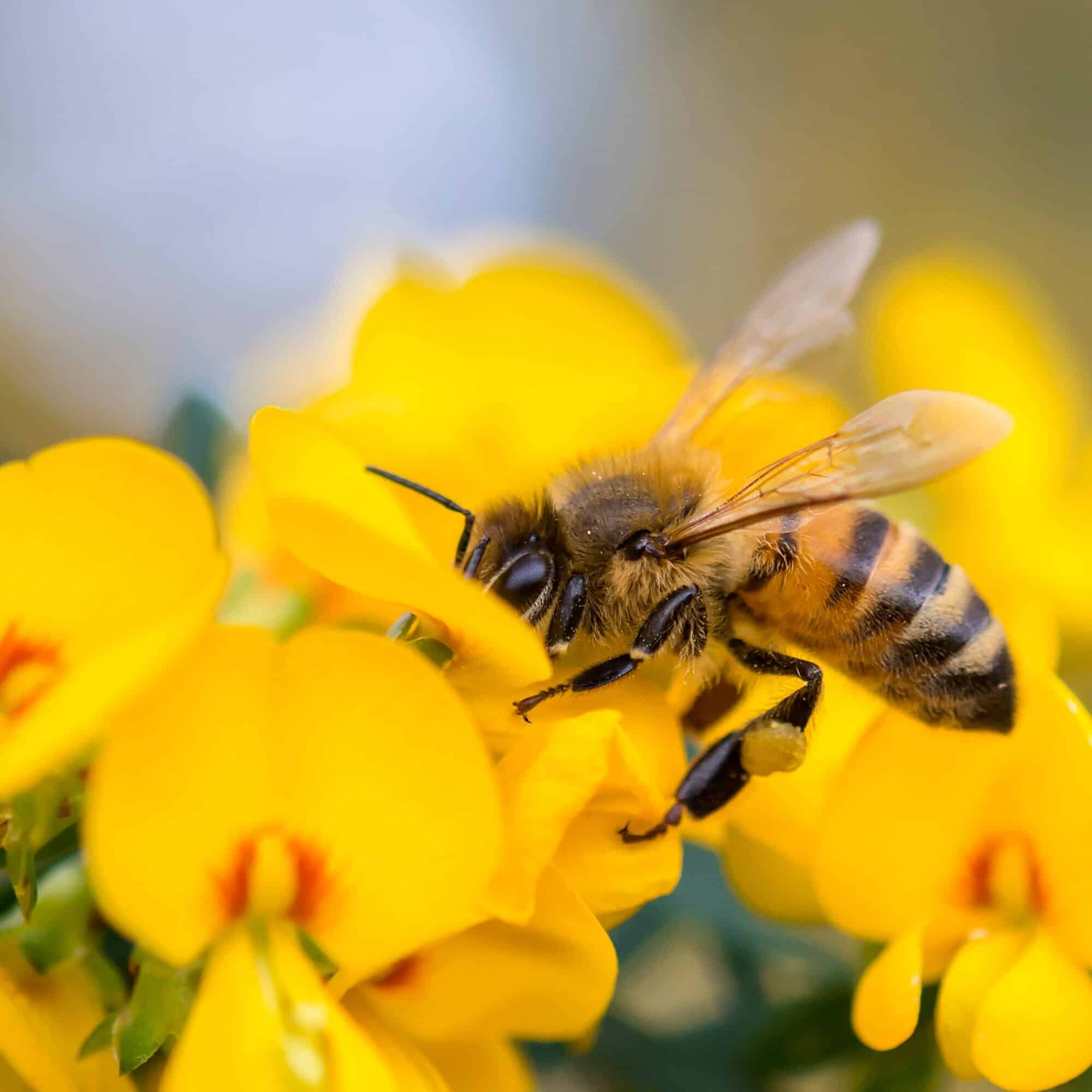 bee-products-from-local-shops-canada