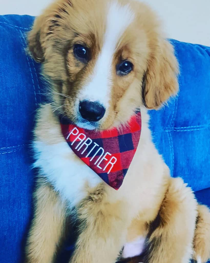 Must-Have Pet Accessories from 7 Ontario Businesses